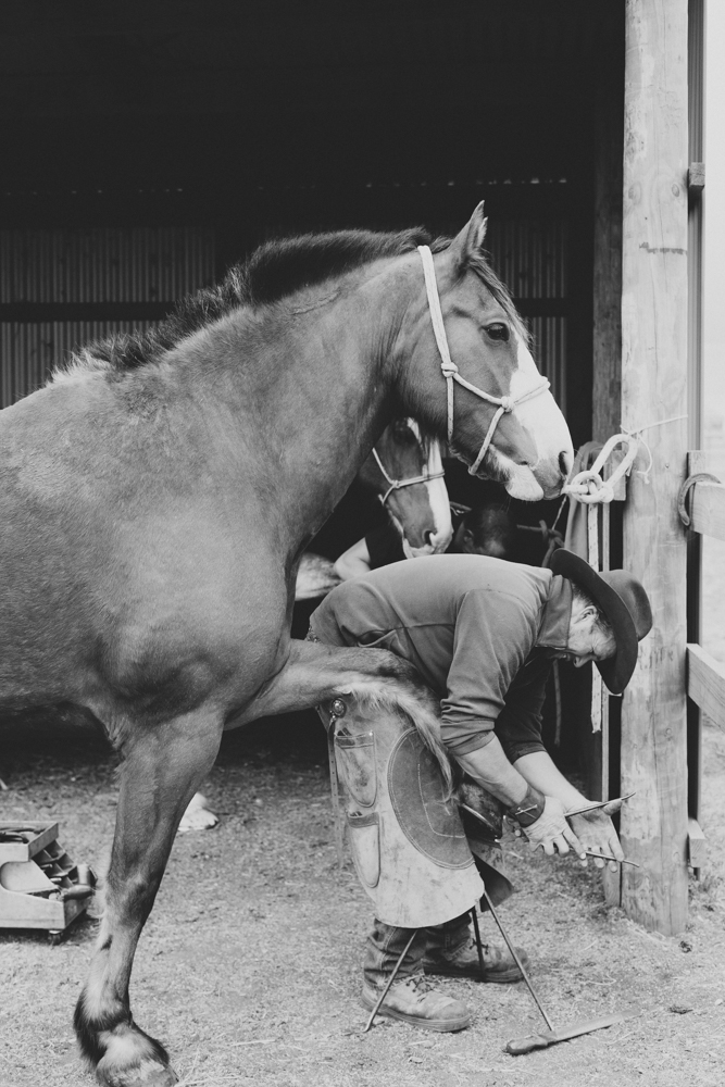Melbourne lifestyle photographer Marnie Hawson's An Honest Trade project - farrier Tony Blanchard and Farriers Down Under