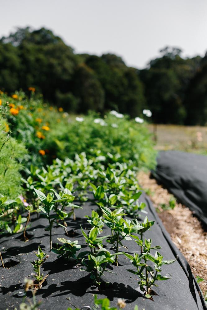 Melbourne lifestyle photographer Marnie Hawson's An Honest Trade project - organic flower grower Lindsey Myra