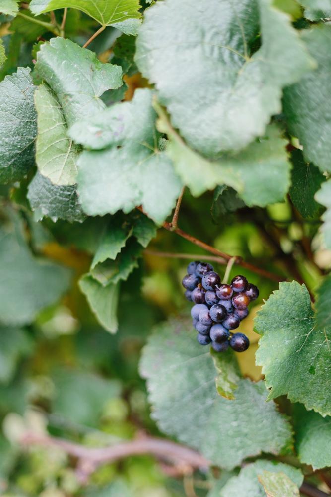 Kiltynane Winery-15.jpg