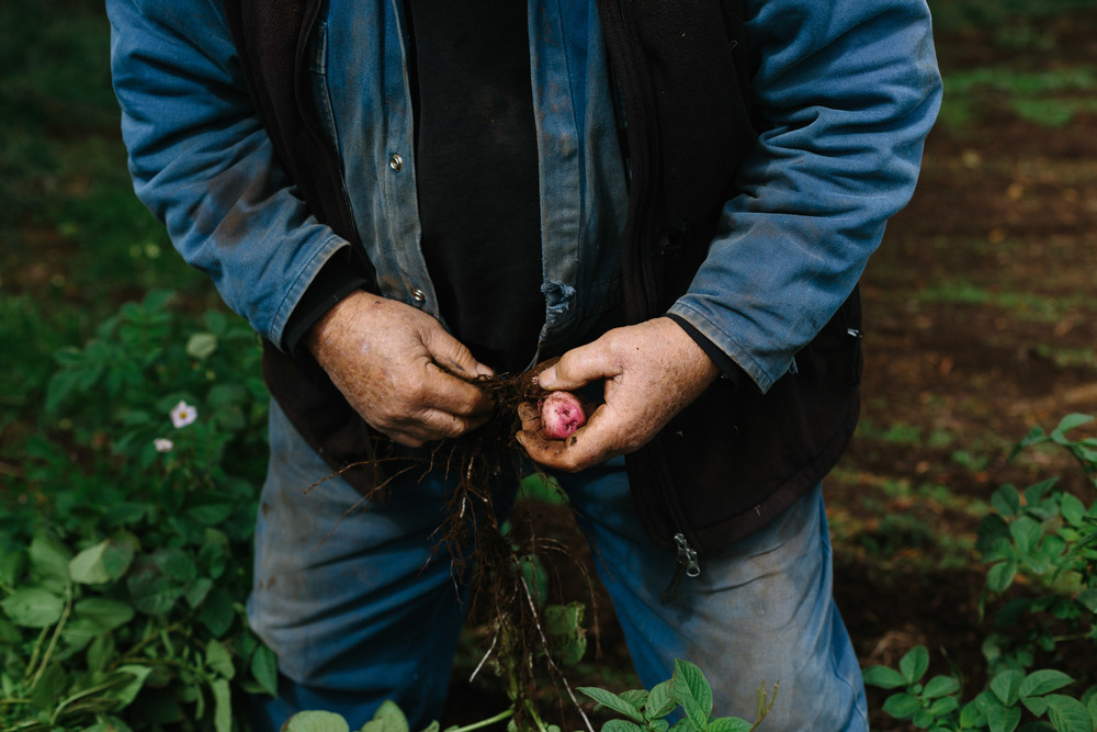 Melbourne lifestyle photographer Marnie Hawson's An Honest Trade project - potato farmers Mal and Lola from Lightwood Farm Organics