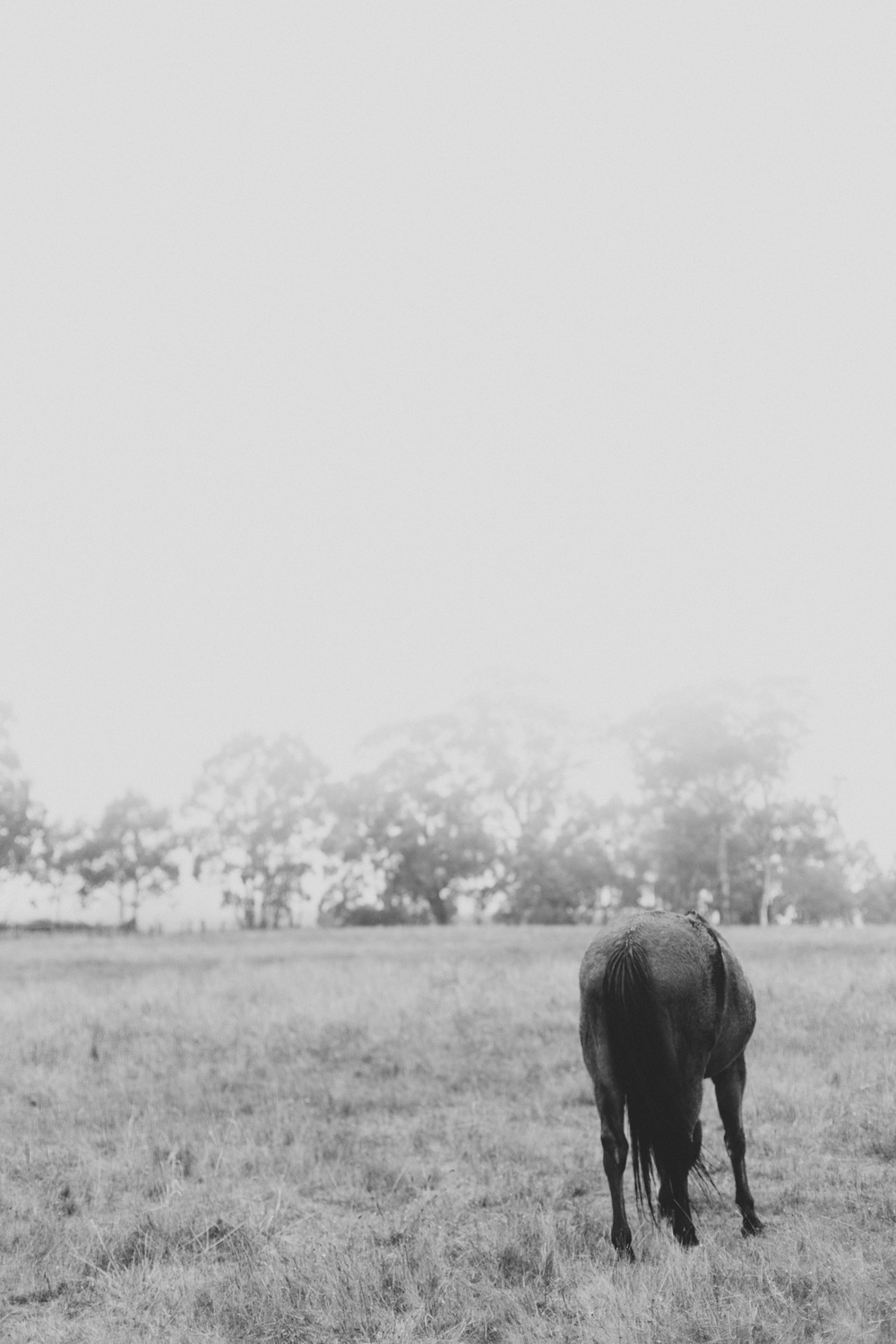 Wet horses on a rainy Autumn day - Marnie Hawson Photographer