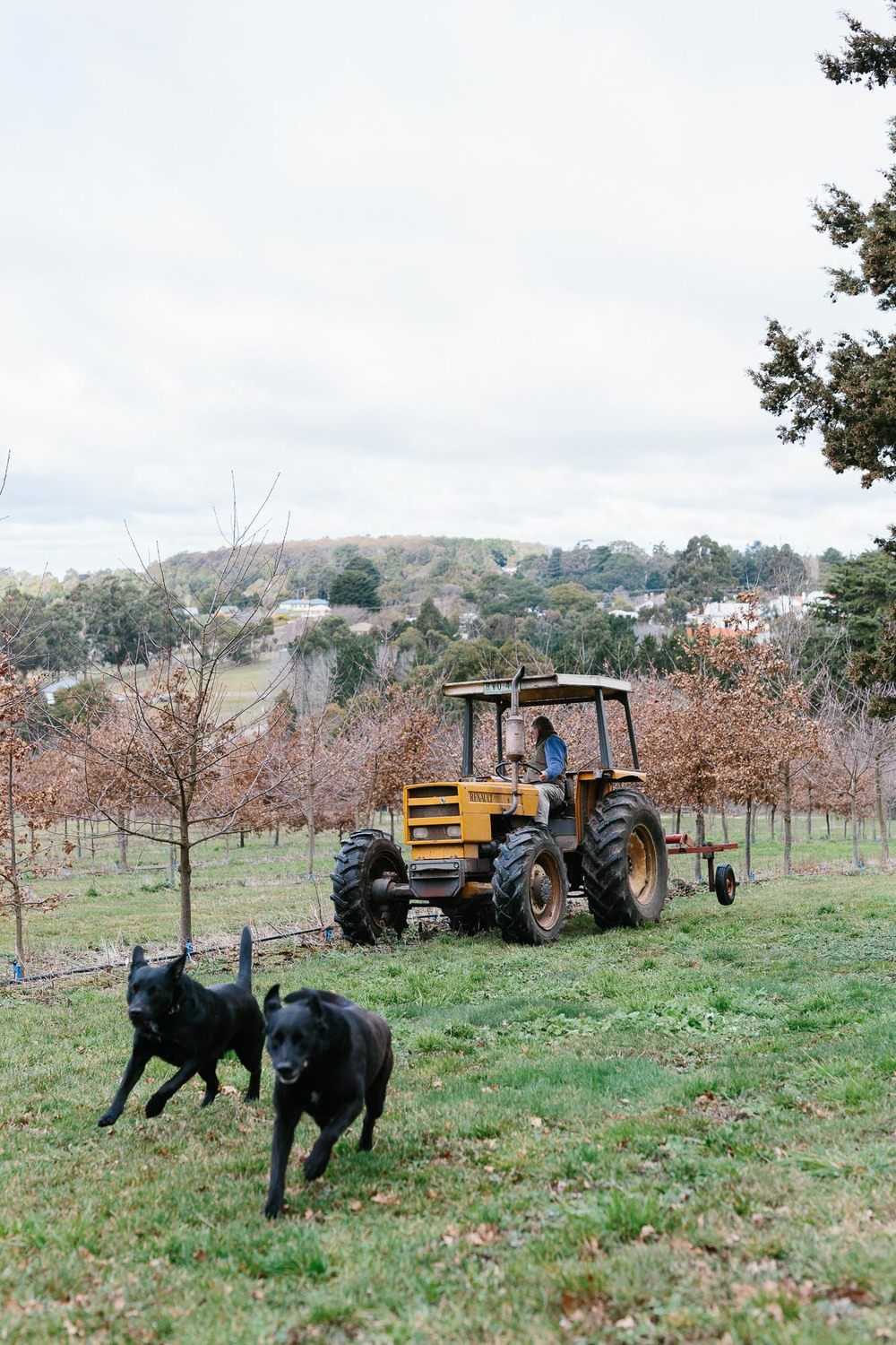 Melbourne lifestyle photographer Marnie Hawson's An Honest Trade project - truffle farmers Ian and Merilyn Woodhouse from Oak Hill Truffles