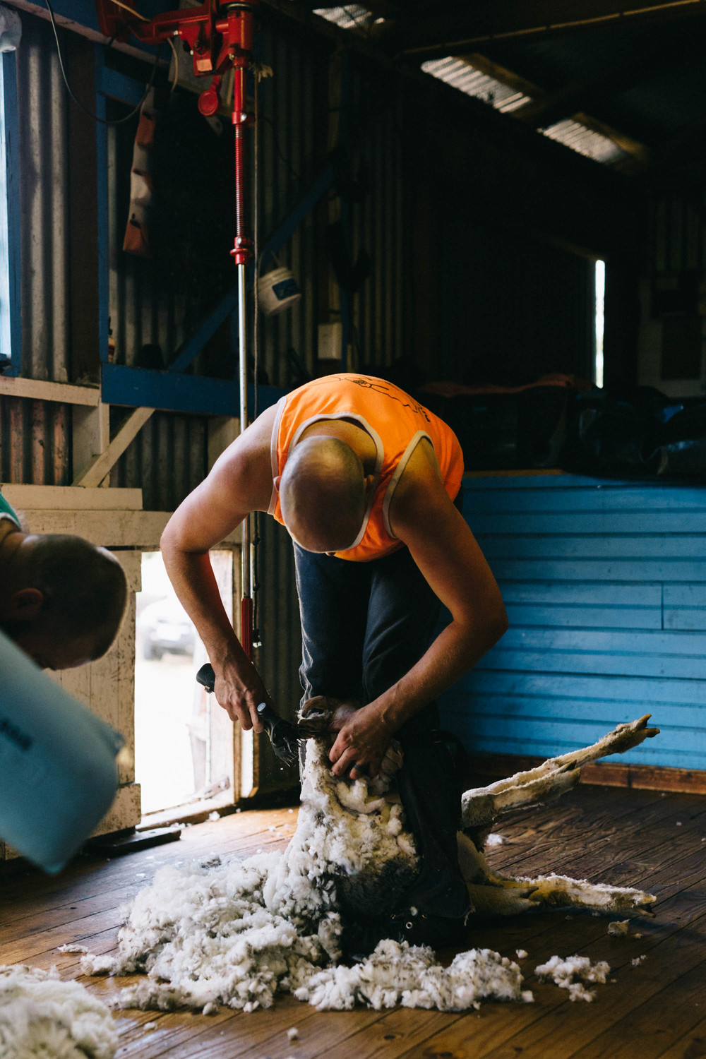 Melbourne lifestyle photographer Marnie Hawson's An Honest Trade project - shearer at Grange Grove