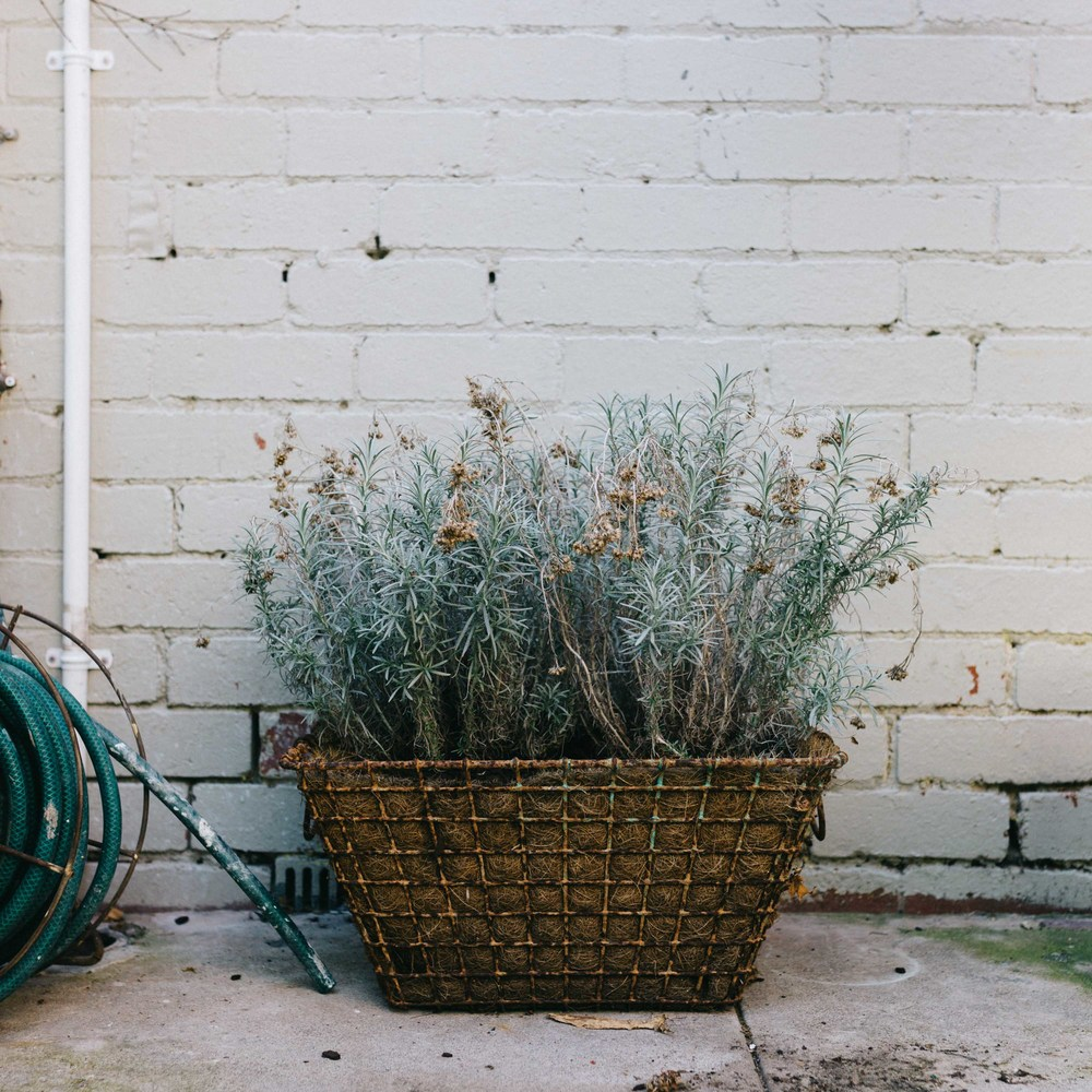Marnie Hawson, Melbourne lifestyle photographer, for The Downtime Agenda and the Happy Melon Studios, Armadale