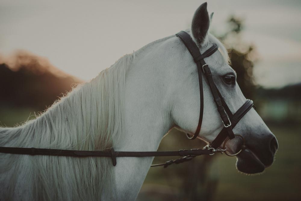 Horses15-61.jpg