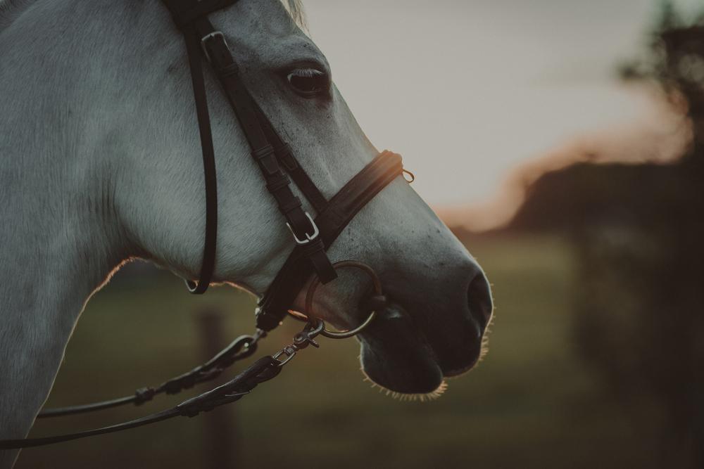 Horses15-66.jpg
