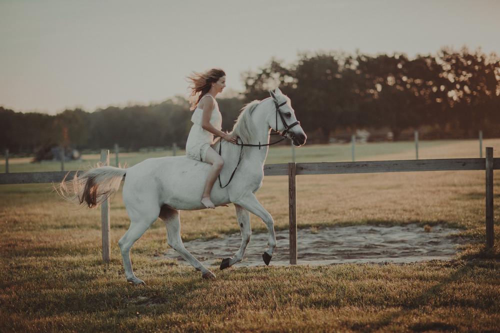 Horses15-74.jpg