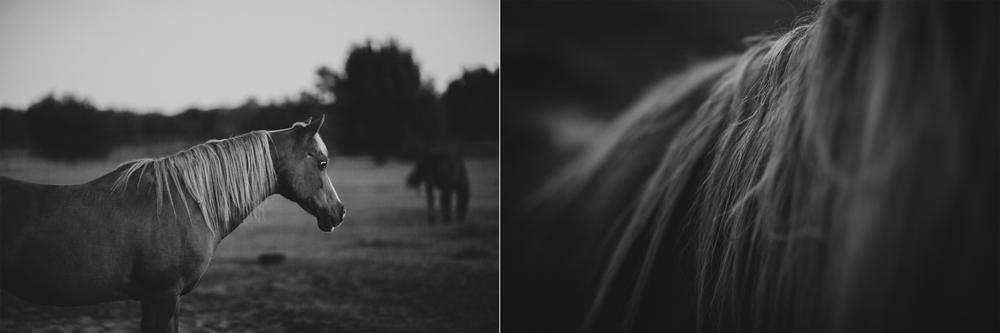 Horses15-9-2.jpg