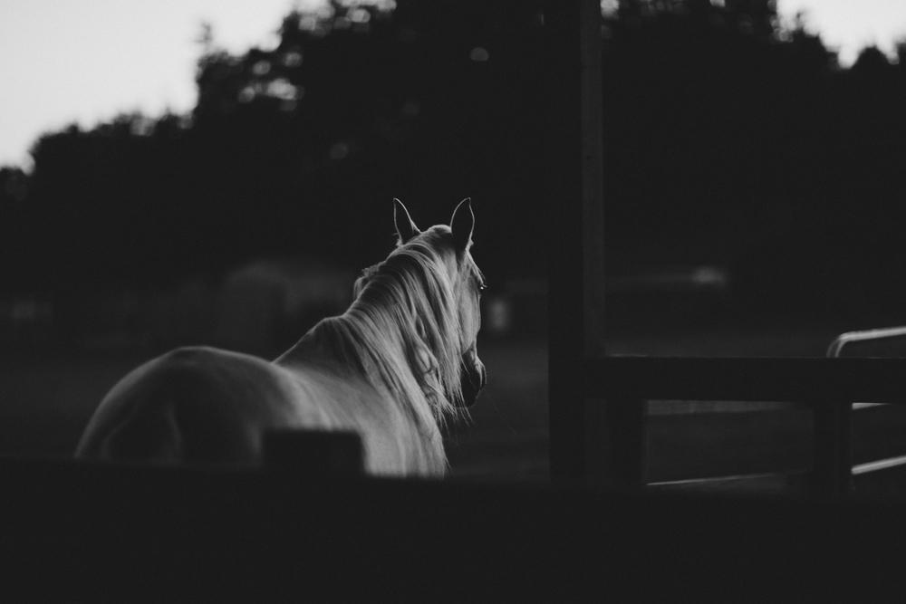 HorsesBlog.jpg