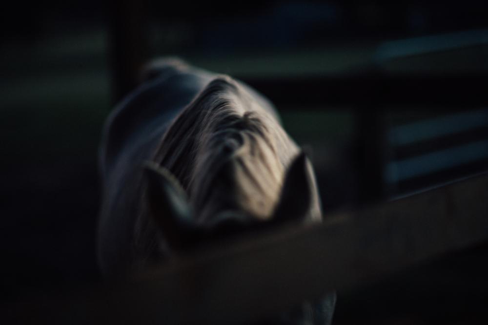 HorsesBlog-3.jpg