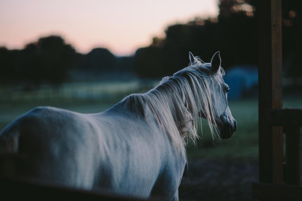 HorsesBlog-2.jpg