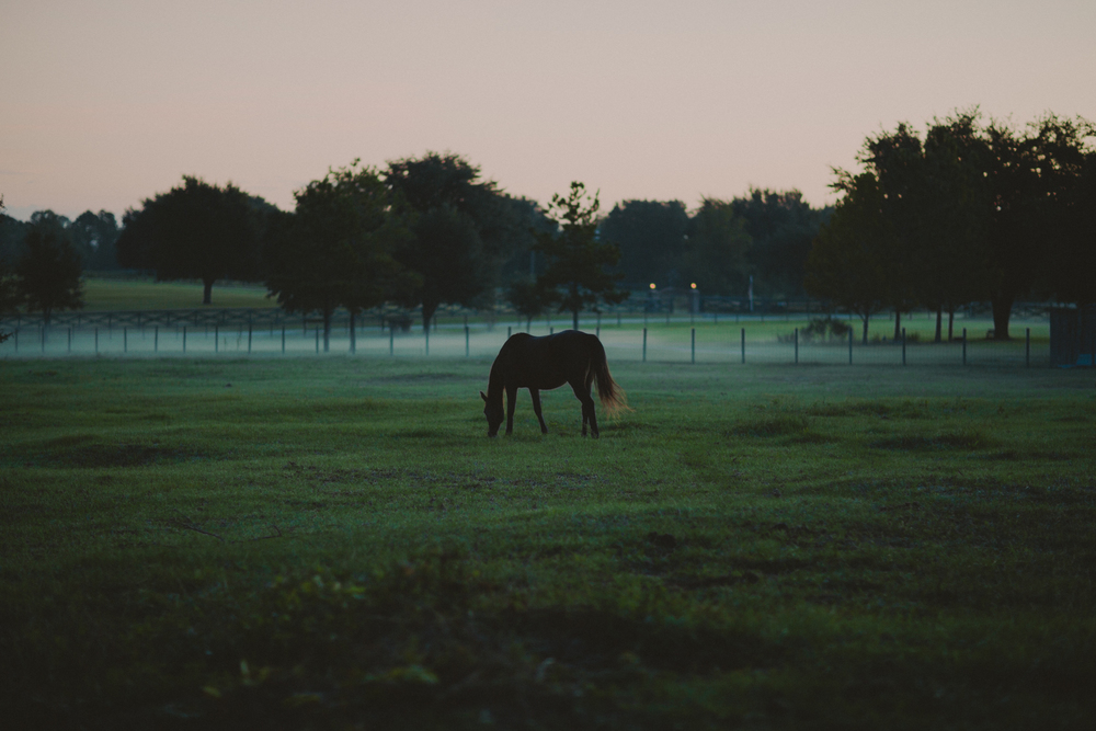 HorsesBlog-8.jpg
