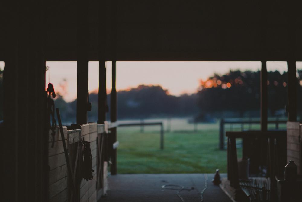 HorsesBlog-10.jpg