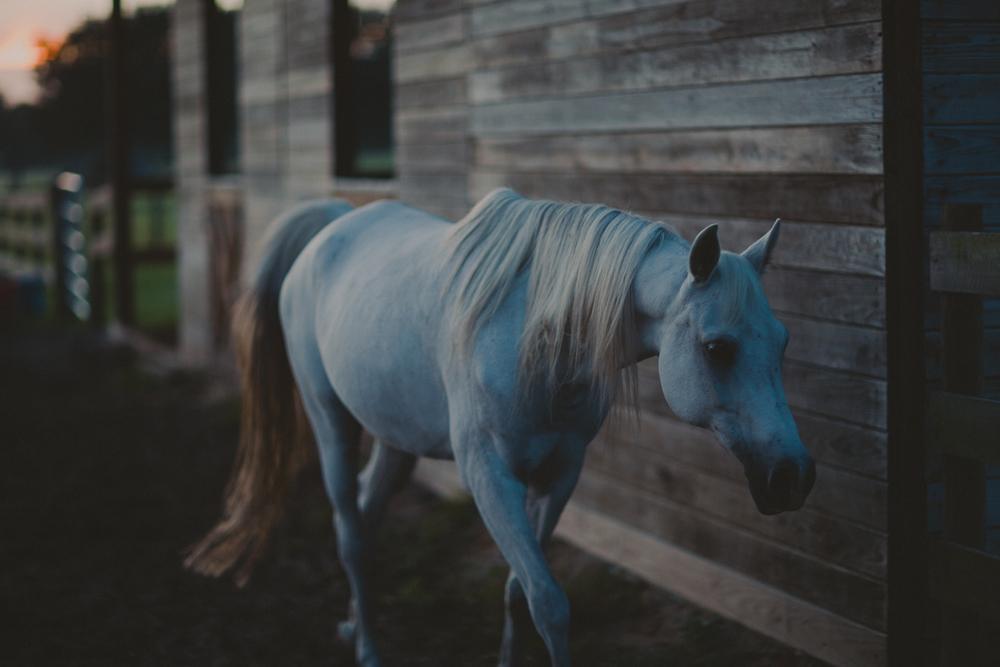 HorsesBlog-11.jpg