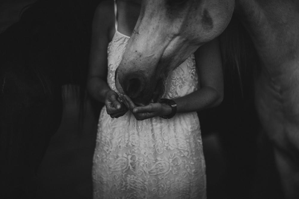 HorsesBlog-12.jpg