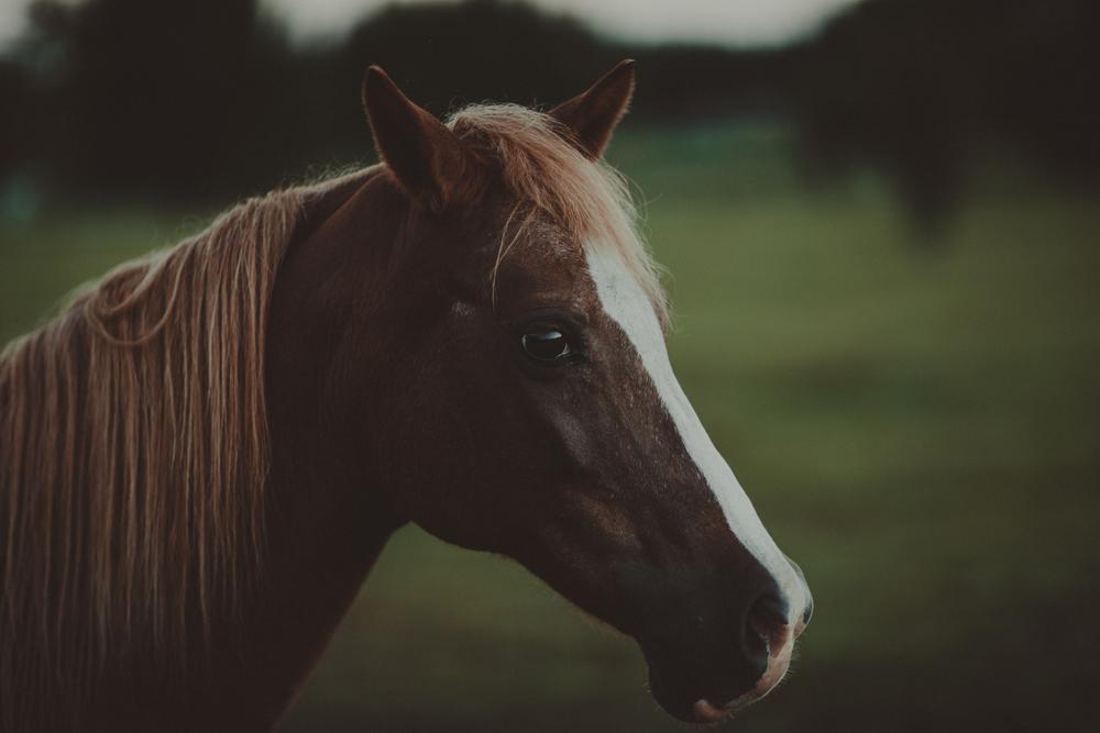 HorsesBlog-14.jpg