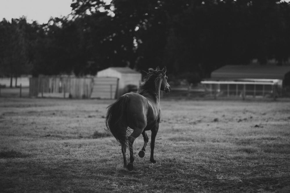 HorsesBlog-13.jpg