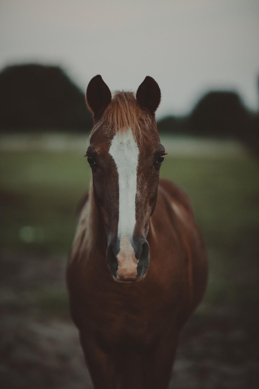 HorsesBlog-16.jpg