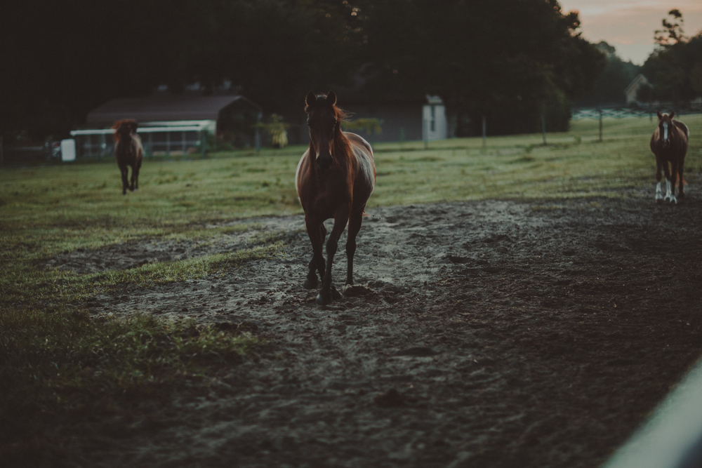 HorsesBlog-17.jpg