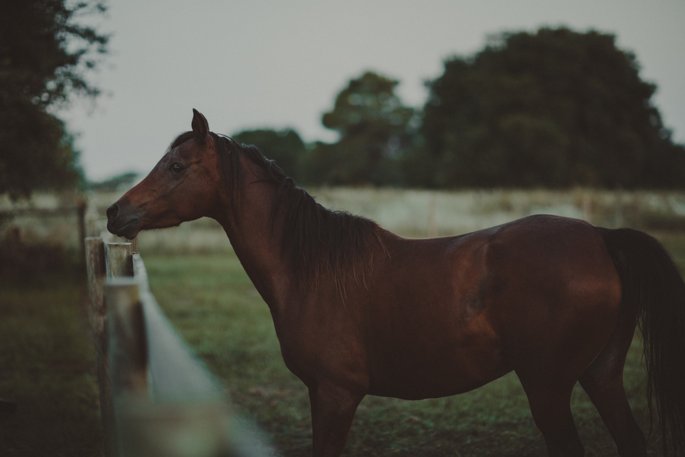 HorsesBlog-19.jpg