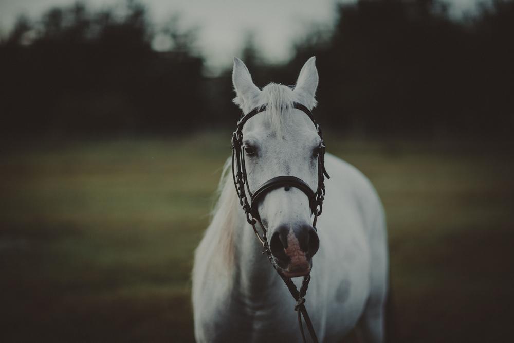 HorsesBlog-21.jpg