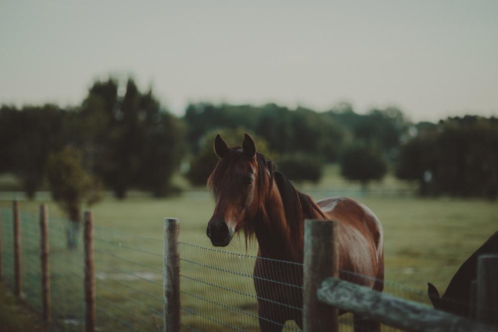 HorsesBlog-22.jpg