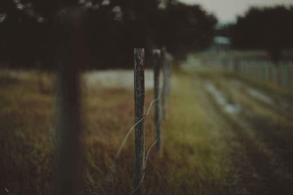 HorsesBlog-23.jpg