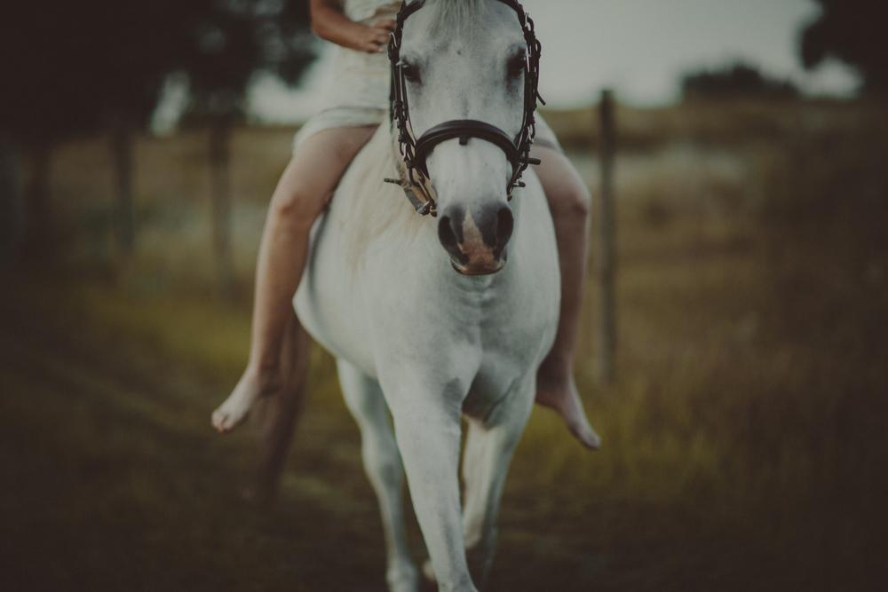 HorsesBlog-26.jpg