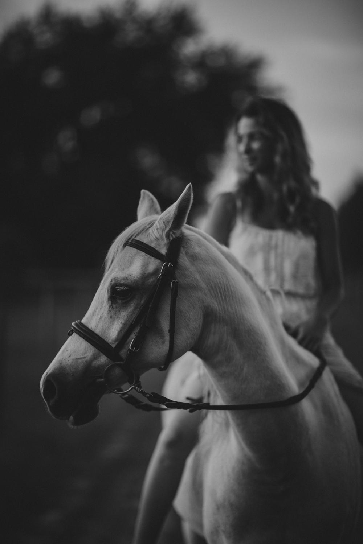 HorsesBlog-27.jpg