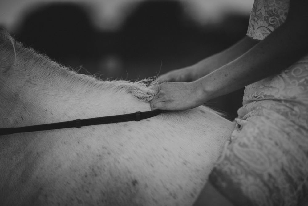 HorsesBlog-28.jpg
