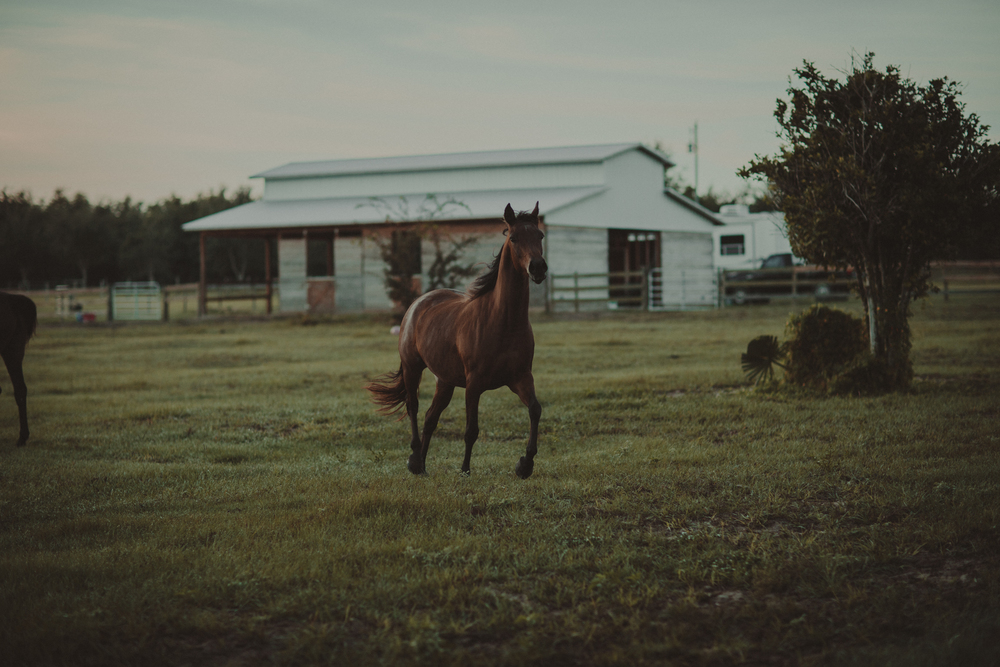 HorsesBlog-29.jpg
