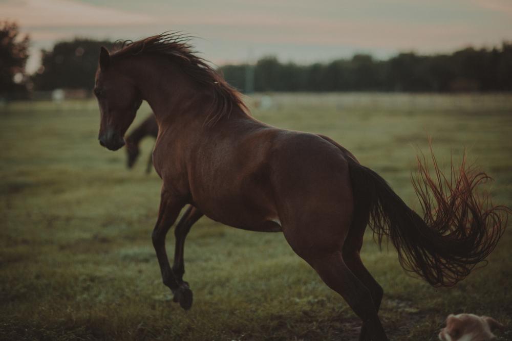 HorsesBlog-30.jpg