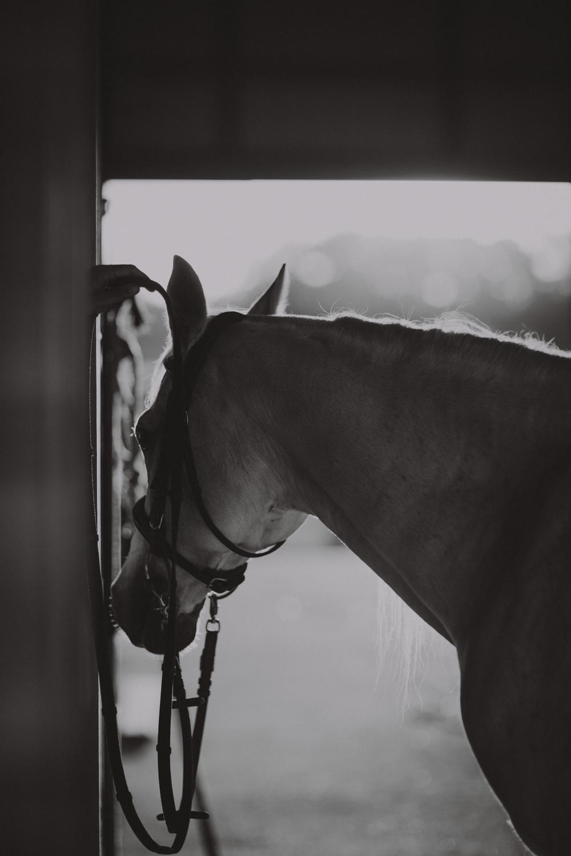HorsesBlog-36.jpg