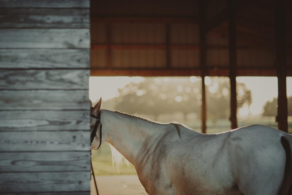 HorsesBlog-35.jpg