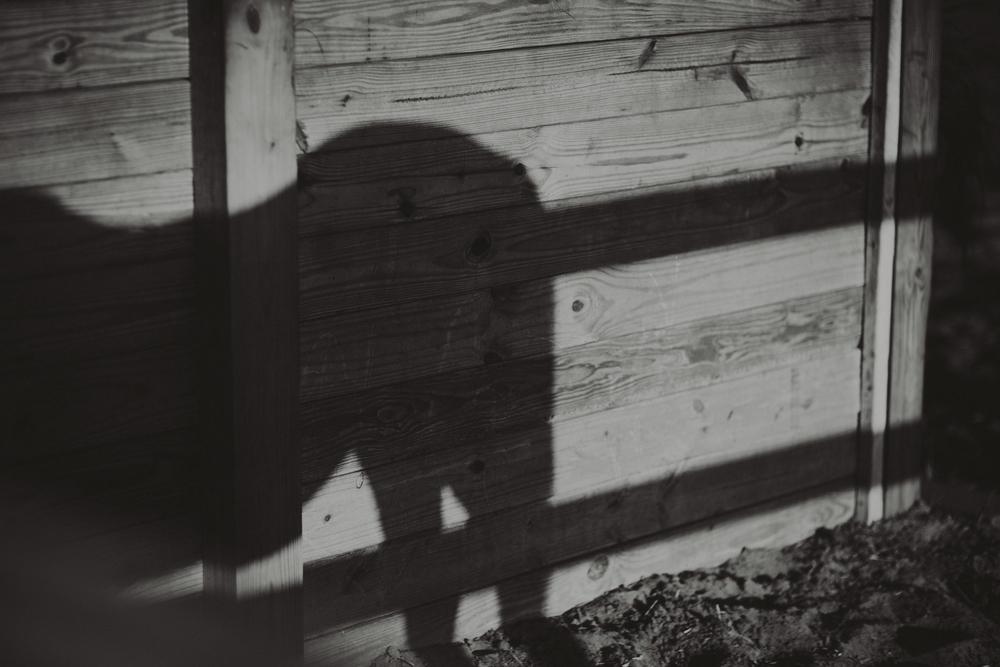 HorsesBlog-38.jpg