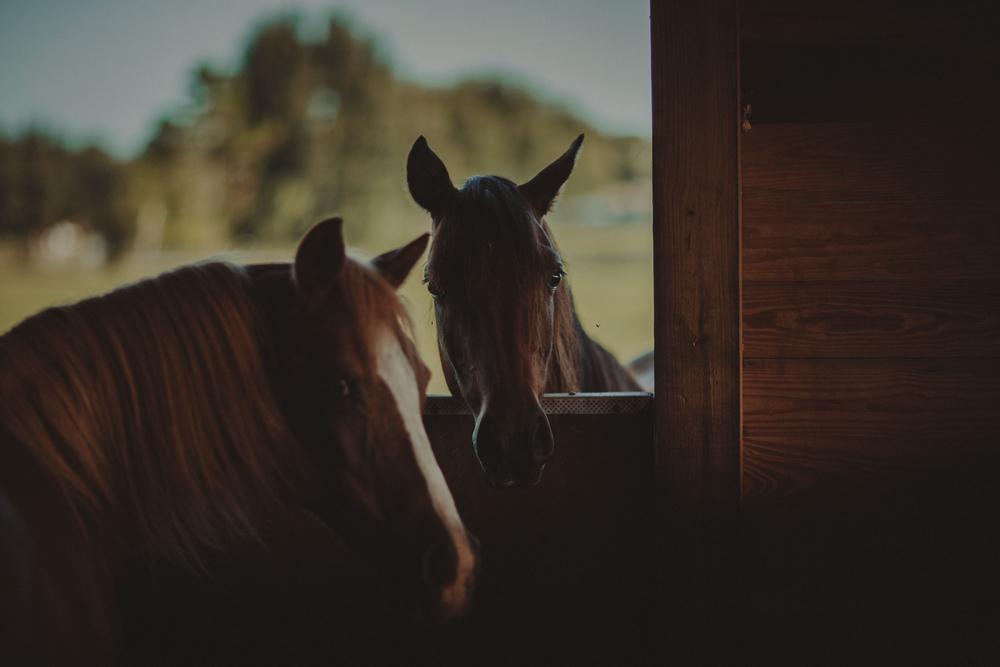 HorsesBlog-43.jpg