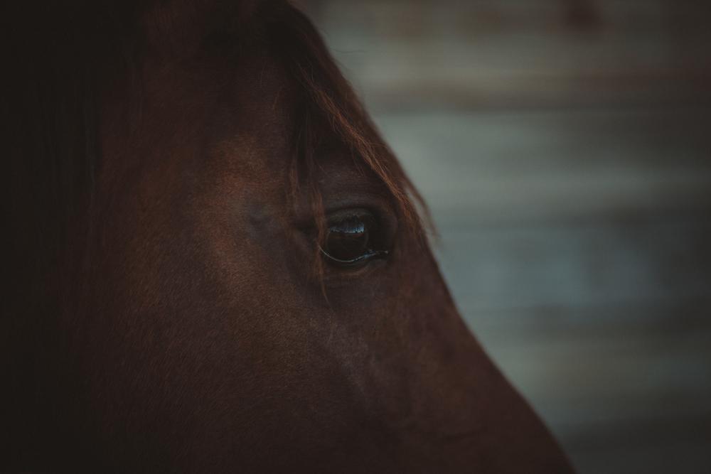 HorsesBlog-45.jpg