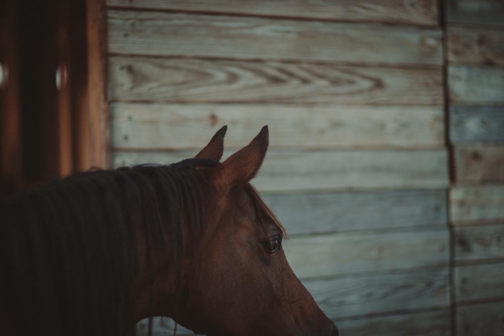 HorsesBlog-44.jpg