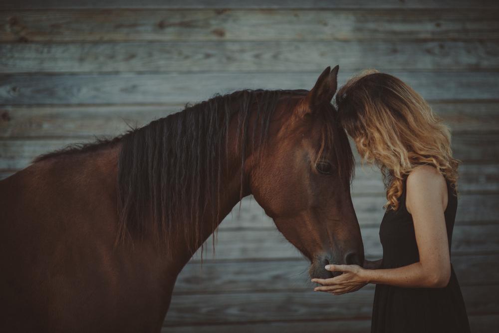 HorsesBlog-46.jpg