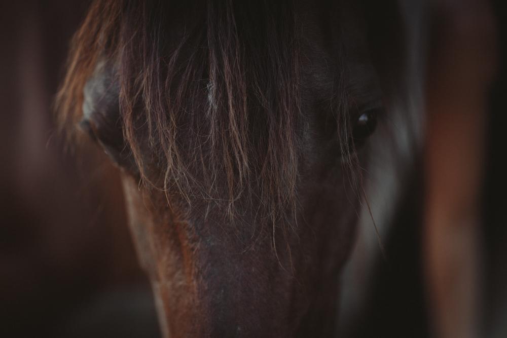 HorsesBlog-48.jpg