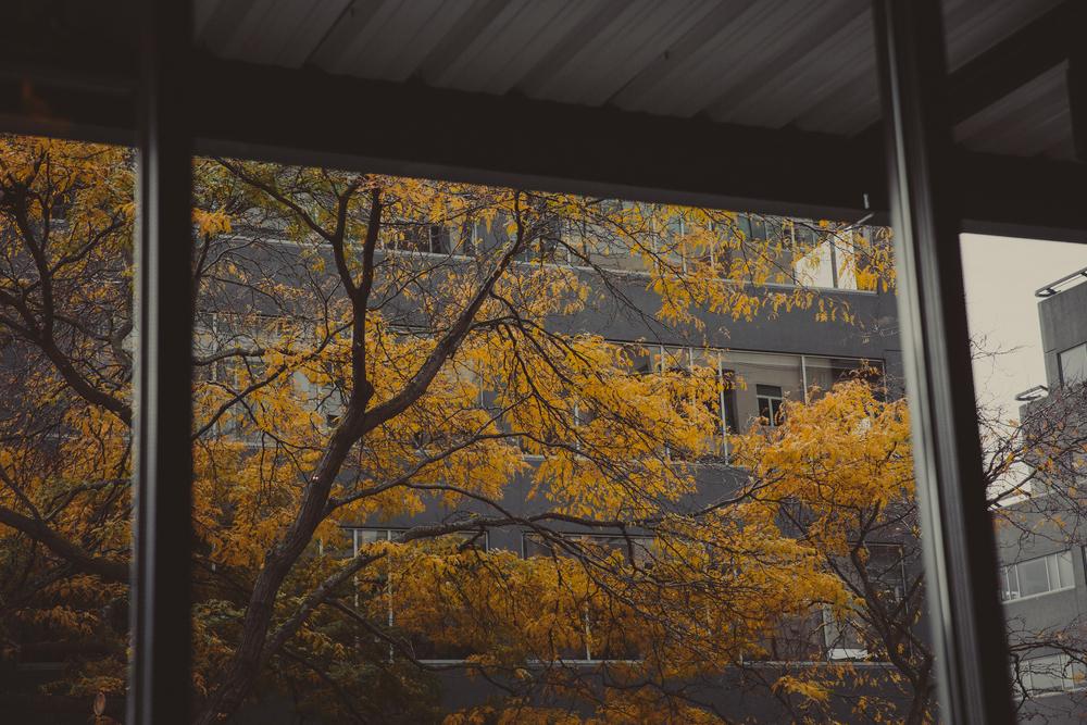 Seattle-61.jpg