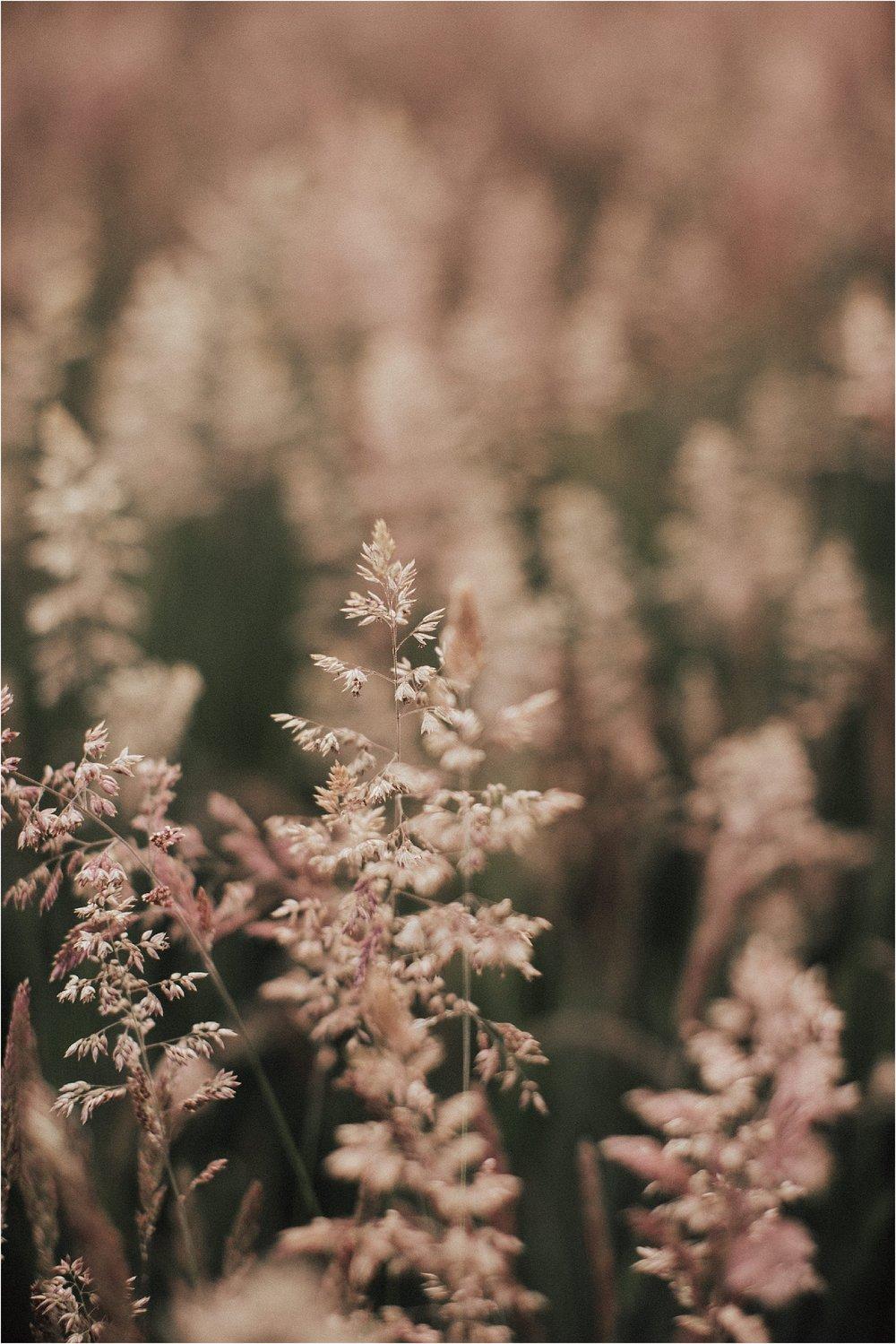 Sarah Brookhart Photography_0732.jpg