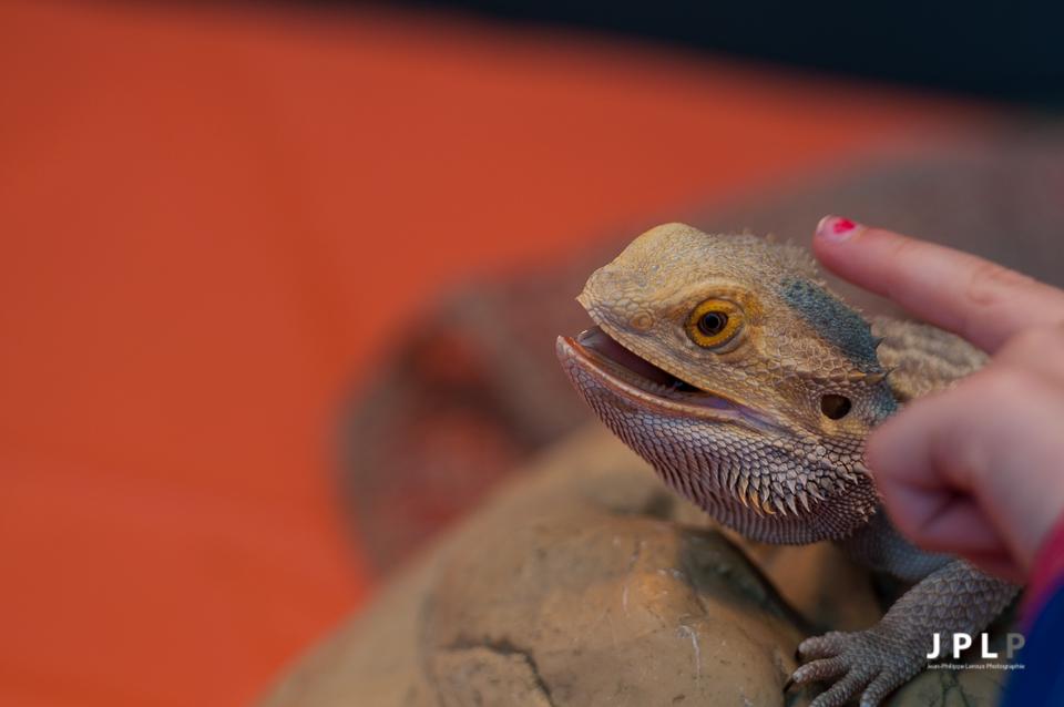 Les enfants pouvaient en apprendre plus sur les reptiles et même les toucher.