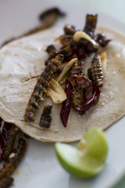 Cuchama al ajillo. Lepidopteran larvae from Puebla, Mexico.Paradirphia fumosa (Saturnidae). Photo: Antonio Ibarra Jimenez