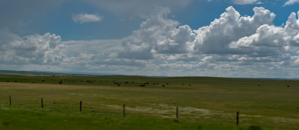 Canadian prairies. Vast amount of land is required to produce animal protein. Photo: Matt Holl
