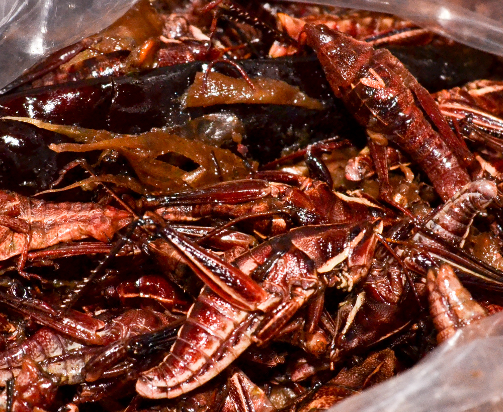Chapulines – grasshoppers – with dry chiles, garlic, salt, and lime. Photo: Sebastian Ibarra Jimenez