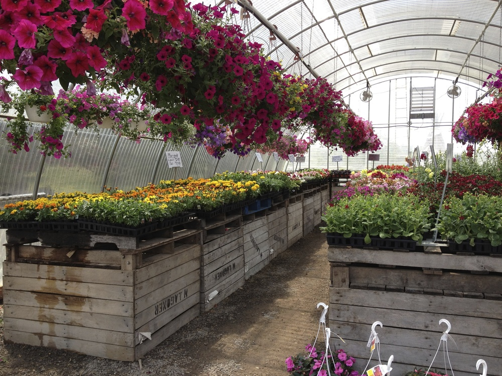 We have hundreds of beautiful hanging baskets!