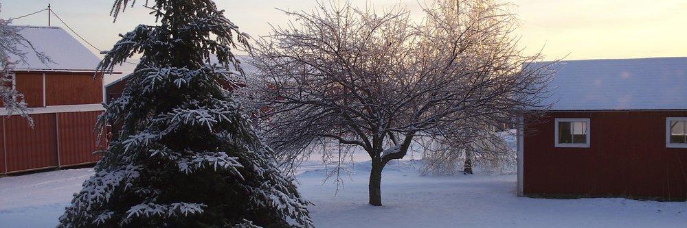 Farm Ice 2008 011.JPG