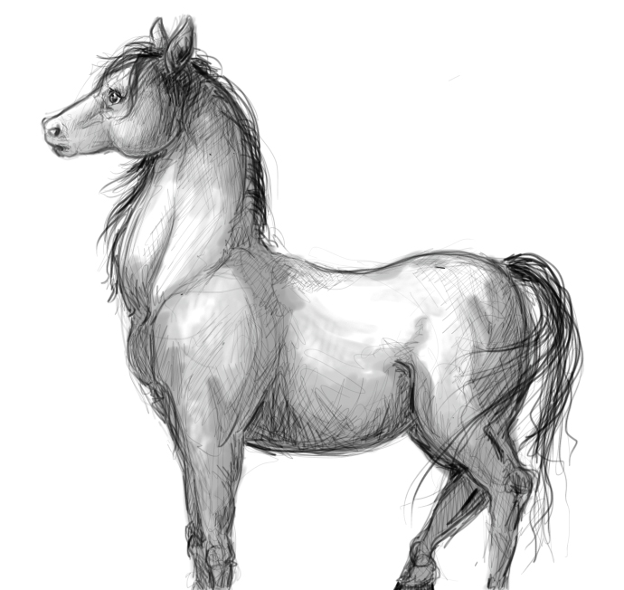 HorseSketch.jpg