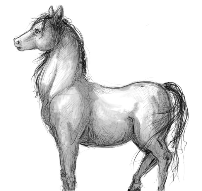 HorseSketch.jpg